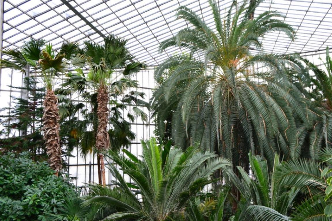 Palmy w Palmiarni